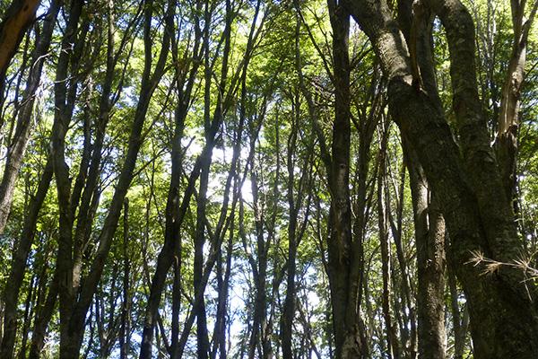 21 de marzo: Día Internacional de los Bosques. Es hora de cambios estructurales.